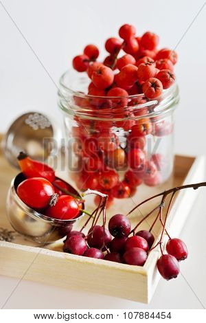Autumnal Berries - Hawthorn, Rowan And Rosehip Fruit