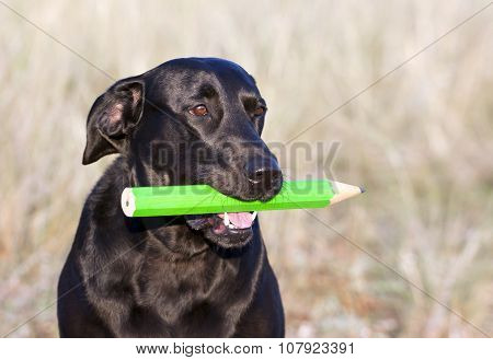 Clever dog holding a pencil in his mouth poster