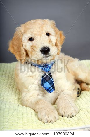 Cute Puppy With Tie
