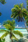 Paradise view of Rangiroa atoll French Polynesia poster