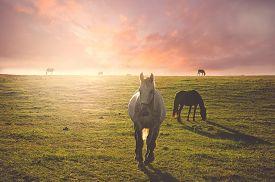 Horse running behind the sun
