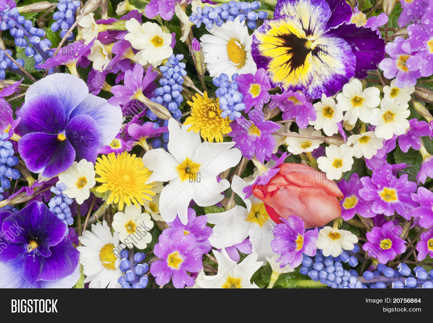 Springs Flowers After Image Photo Free Trial Bigstock