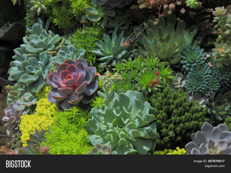 Miniature Garden Image Photo Free Trial Bigstock