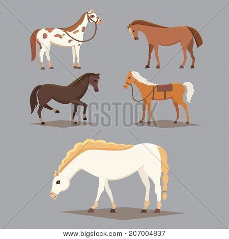 Collection of isolated horses. Cute cartoon horse farm animals.
