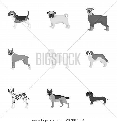 Dachshund, laika, poodle and other  icon in monochrome style.Boxer, rottweiler, bulldog, icons in set collection