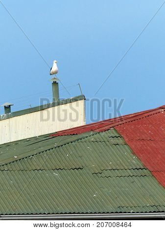 Sea gull perched on a chimney over a colorful roof and a blue sky