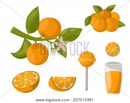 Ripe orange products fruits and slices realistic organic dessert vector illustration. Citrus natural vitamin fresh juice dessert sweet food. Freshness vegan aroma breakfast