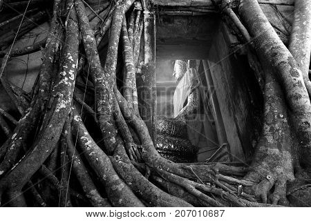 Samut Songkhram Thailand-Oct 2016 Bang Kung Camp A wall was built making a temple Wat Bang Kung Unseen Thailand Beautiful Buddha image in a tree temple 8 October 2016