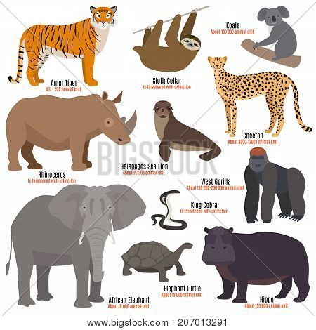Different kinds species, dying rare and uncommon red book animals characters vector illustration. sea lion western gorilla  king cobra african elephant and more