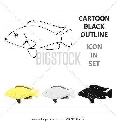 Cichlid hummingbird fish icon cartoon. Singe aquarium fish icon from the sea, ocean  cartoon.