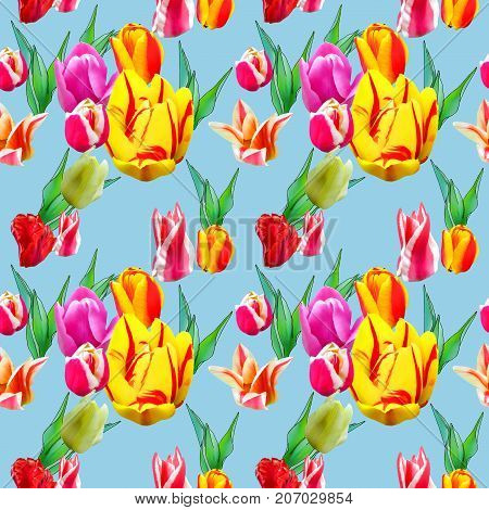 Tulip. Texture of flowers. Seamless pattern for continuous replicate. Floral background photo collage for production of textile cotton fabric. For use in wallpaper covers