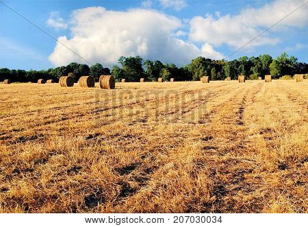 A newly cut hay field of round bales of hay and trees and dramatic clouds in the background. Copy space.