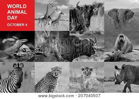 4th October. World animal day. Photos collage