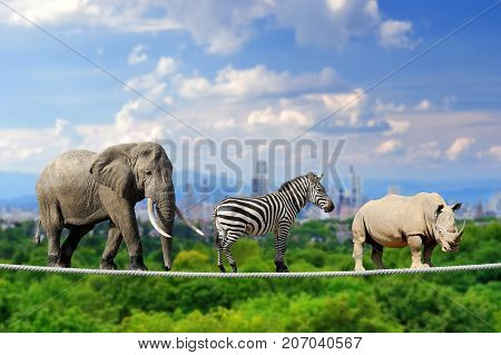 Elephant, Zebra, Rhino With The City Of On The Background
