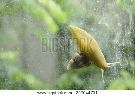 snail climbing slowly on glass door with garden background