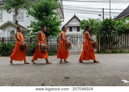 Four Buddhist Monks Collect Alms In Luang Prabang, Laos
