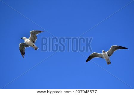 The Group Of Albatrosses / Shearwaters (or