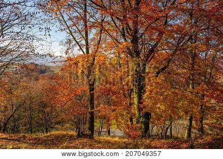 Forest With Red Foliage On Sunny Day