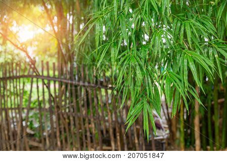 Bamboo Leaf With Bamboo Fence Rural Countryside Nature Background