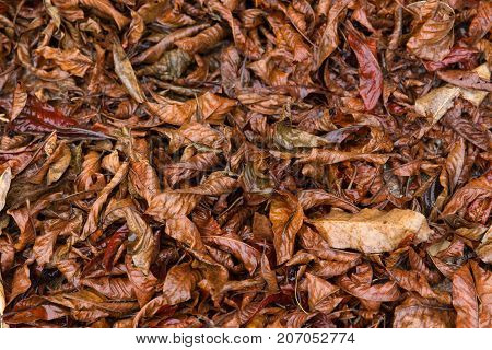 Colorful Fall Autumn Season Nature Background Of Dry Leaf On The Ground In Forest Wet