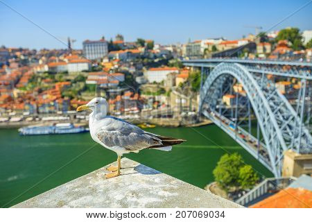 Seagull looking at the city of Porto skyline. Freedom and travel concept. Aerial view of iconic Dom Luis I Bridge on Douro River on the horizon with blurred background.