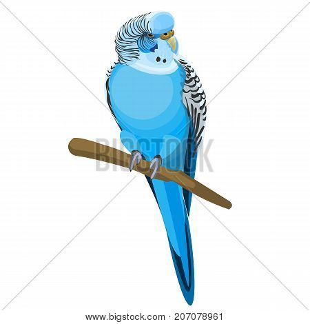 Budgerigar common or shell parakeet informally nicknamed budgie, small long-tailed seed-eating blue parrot sitting on branch realistic vector illustration