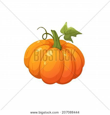 Ripe orange pumpkin icon isolated on white background. Fresh pumpkin vector illustration.
