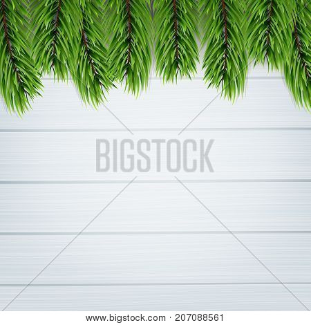 Fir tree. Background of isoalted Christmas tree branches. Winter seasonal background.