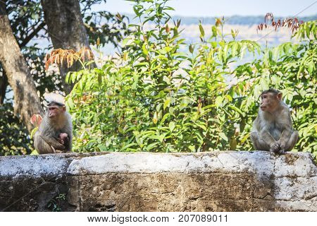 Monkey family in the tropical forest at sunny day