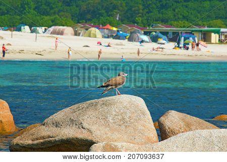 near the beach, on the rocks sitting bird, beautiful sea bird poses at the seaside. Blue Sky