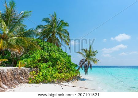 Tropical island. Palm trees over the ocean blue lagoon. The roots of the trees are washed out with water. Global warming and rising of the ocean level.