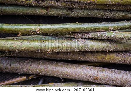 The rustic weave of the fence. Weaving of tree branches. Design handmade wood. Rural crafts natural materials.