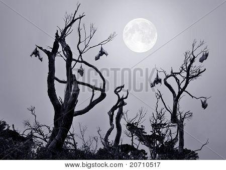Bats in a Tree