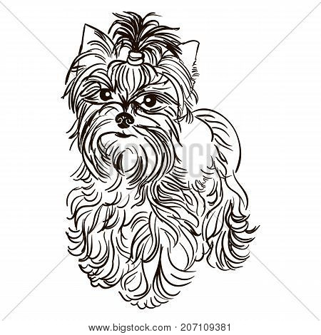 Vector black and white illustration of dog breed Yorkshire Terrier isolated on white background