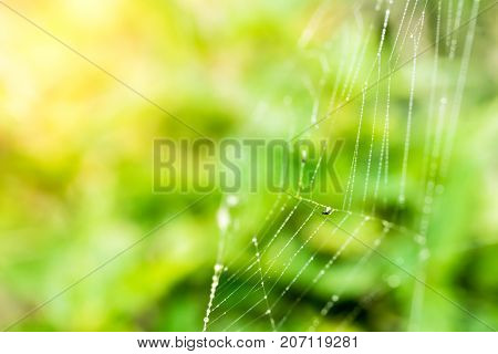 Selective Focused Spider's Web From Side
