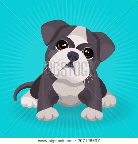 Bulldog puppy cute toy in white and beige color vector illustration isolated on blue background. Small dog purebred with kind eyes
