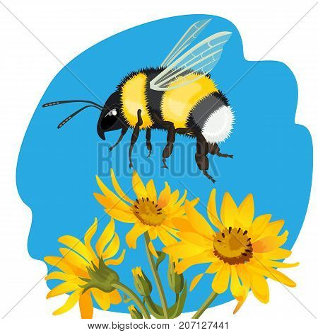 Bumble bee flying over yellow flowers on background of blue sky vector illustration. Realistic male bee collects pollen from flowering plants