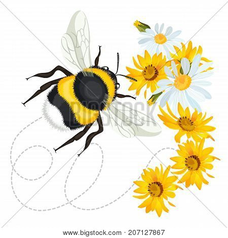 Bumblebee closeup head, trace swirled line on background with yellow arnica and white chamomile flowers vector illustration greeting card design
