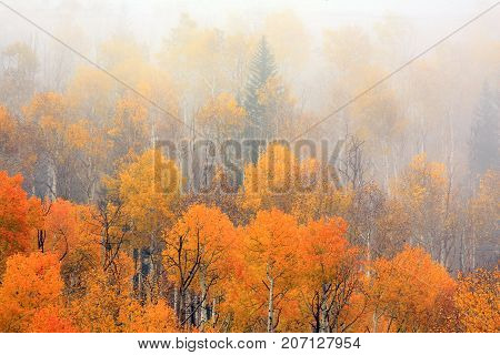 Fall colors shining through a heavy morning fog