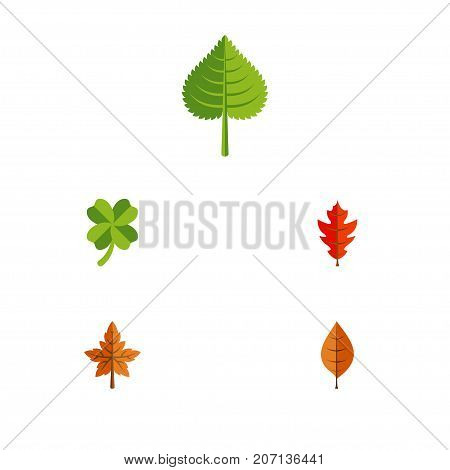 Flat Icon Foliage Set Of Frond, Leafage, Hickory And Other Vector Objects