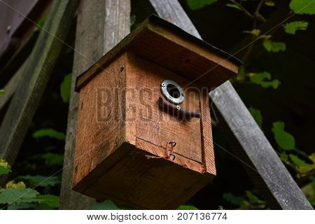 birdhouse on wooden background in forest Park hand wood shelter for birds to spend the autumn and winter