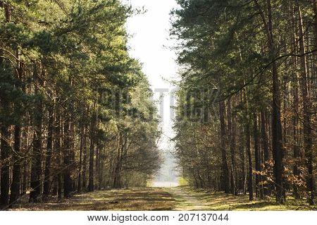 Spring road  in Kampinos National Park, Poland