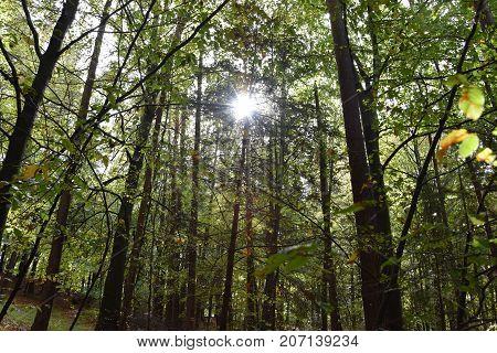 Primeval forest Bavarian forest national park autumn