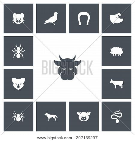 Set Of 13 Editable Zoology Icons. Includes Symbols Such As Kine, Bedbug, Arachnid And More