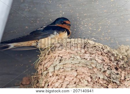 Beautiful Background With A Swift In A Nest