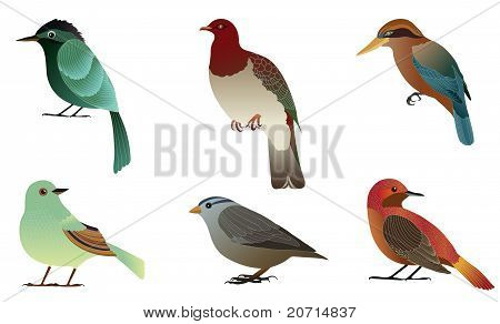 Set of different birds.