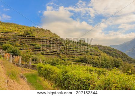 the characteristic viticultural landscape of Carema, Piedmont,Italy / the slopes hilly have been terraced with the construction of dry stone supporting walls on which the pylons rise with vineyards