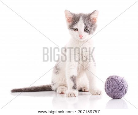 kitten is played with a ball of thread. Threaded games. cat poster. young player in the ball.