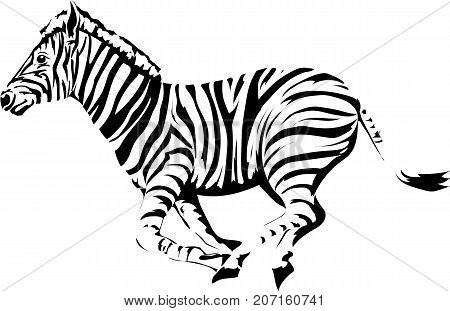 The running animal is a zebra. Vector black and white image on white background.