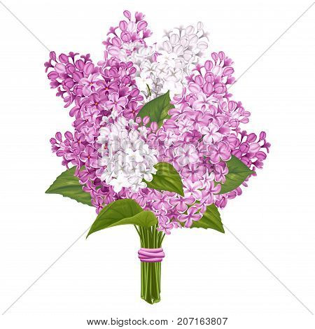 Spring flowers. Bouquet of gentle fragrant purple and white branches of lilac. Vector illustration. Isolated on white background.